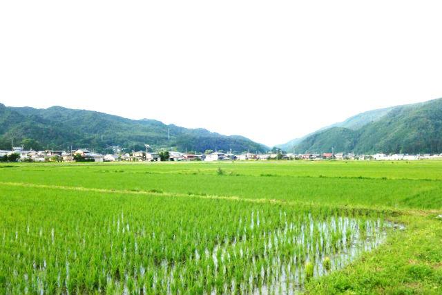 【岐阜・高山・農業体験】2日間に渡って楽しむ!飛騨コシヒカリの稲刈り体験と試食会&霊峰位山トレッキング