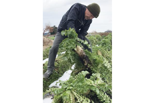 【島根・松江・農業体験】新鮮野菜を食べよう!大根島の野菜の収穫&料理体験