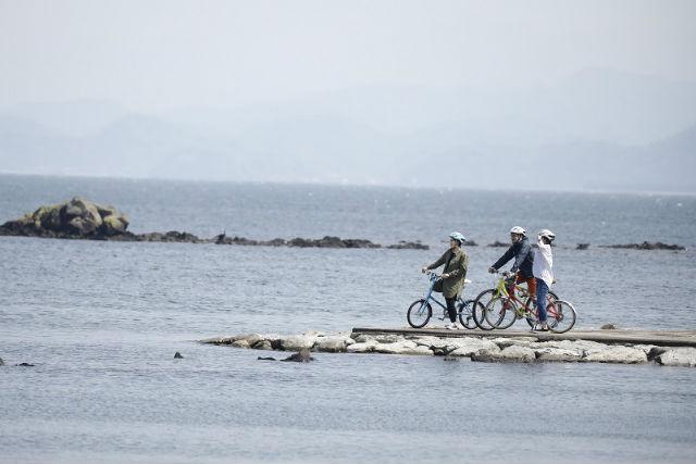 ココリト大根島