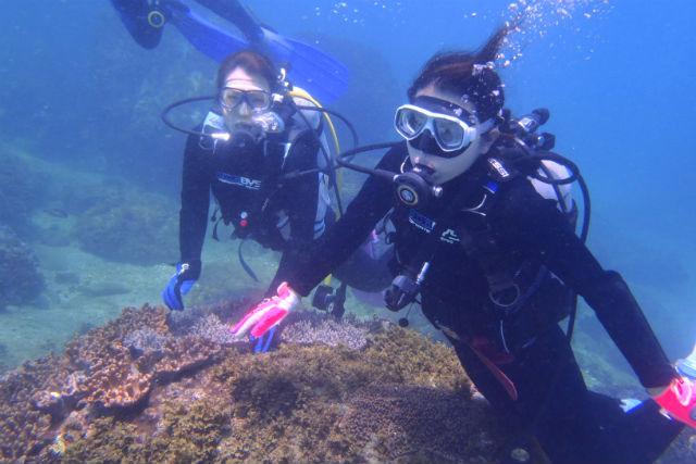 【宮崎・日南市・体験ダイビング】南郷の海で体験ダイビング(3時間)