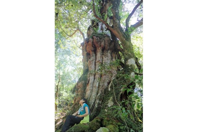 【鹿児島・屋久島・エコツアー】屋久杉の森で癒しの時間を!森林浴ツアー