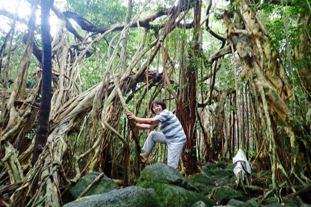 【鹿児島・屋久島・エコツアー】屋久島もう1つの魅力!ガジュマルの森で森林浴ツアー