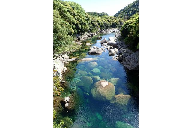【鹿児島・屋久島・エコツアー】人と自然とのつながりを感じる苔の森で森林浴ツアー