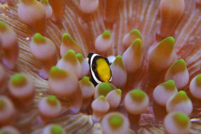【和歌山・体験ダイビング】無人島「鹿島」の水中世界を満喫!体験ダイビング