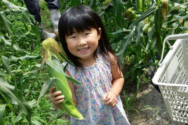 【岡山県・岡山市・トウモロコシ狩り】採れたての旬な甘さを味わう!トウモロコシ狩り