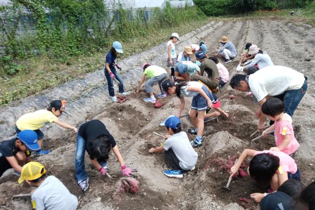【岡山県・岡山市・農業体験】秋の味覚を味わおう!みんなで一緒にさつまいも掘り体験