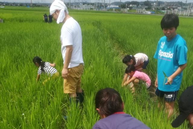 【神奈川・座間・農業体験】採れたてを味わう昼食付!都会の近くでのんびり農業体験