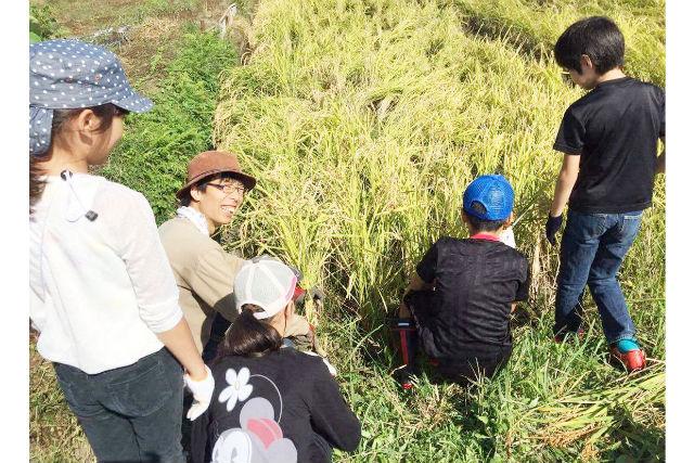 【神奈川・座間・農業体験】お子様の食育にもおすすめ!稲刈り&はざ掛け体験