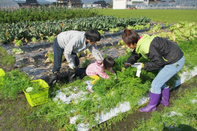 【富山・小矢部・収穫体験】旬の野菜10〜20種類を自由に収穫!野菜収穫体験