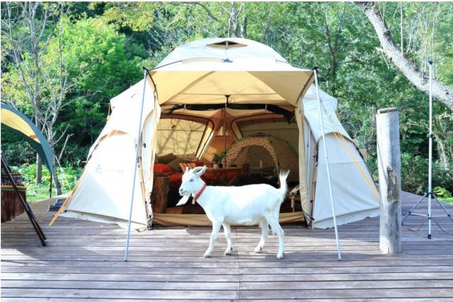 【2.5%還元】【北海道・札幌・グランピング】動物達と一緒に過ごす夢の一夜!テント1棟貸出し【2名から予約可能】
