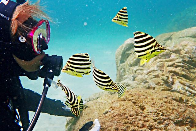 【愛媛・松山・体験ダイビング】フレンドリーな魚に出会える愛南町で体験ダイビング