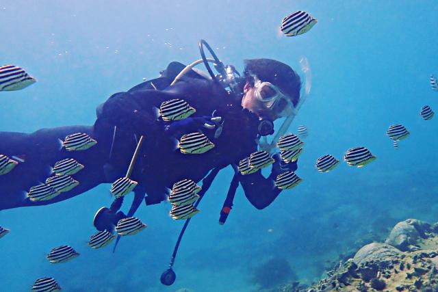 【愛媛・松山・ファンダイビング】魚と珊瑚に囲まれた愛南町ビーチでファンダイビング
