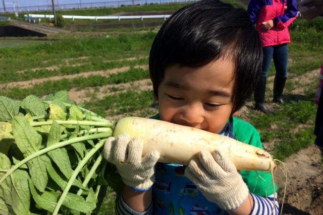 【千葉・木更津・収穫体験】小学生以下無料☆旬のお野菜を収穫!お手軽コース