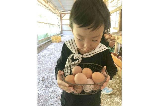 【福井・坂井・牧場体験】福地鶏の餌やりと、たまご採り体験&炊き立て卵かけご飯