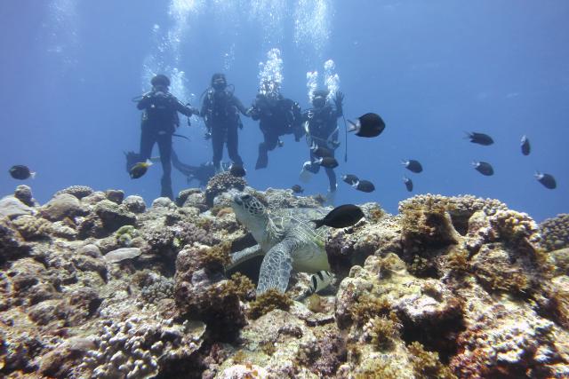 【鹿児島・沖永良部・体験ダイビング】まるで水族館!海中世界を楽しむ体験ダイビング