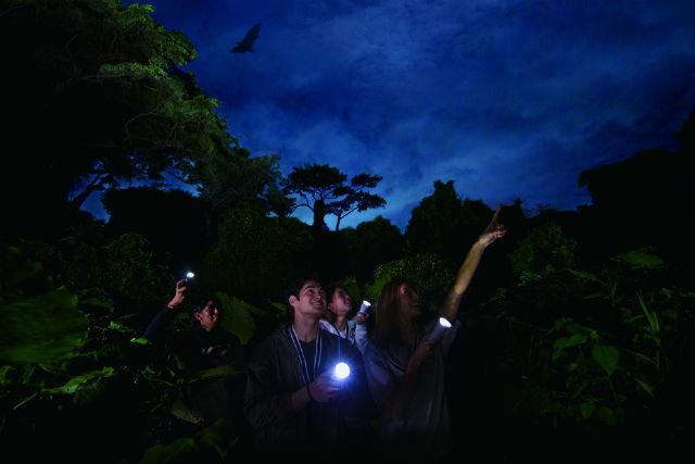 【沖縄・南部・ナイトツアー】何が起こるかわからない。沖縄ジャングルナイトツアー