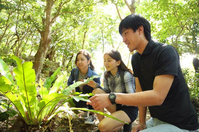 【沖縄・国頭村・ガイドツアー】亜熱帯の森で大冒険!?大石林山ガイドツアー
