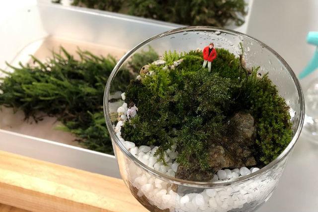 【東京・あきる野・寄せ植え体験】モスアリウムづくり&養沢の水で作る養沢サイダー