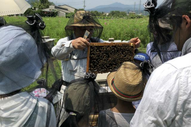 【東京・西多摩・手作りキャンドル】自然の中で養蜂体験&ミツロウキャンドル作り
