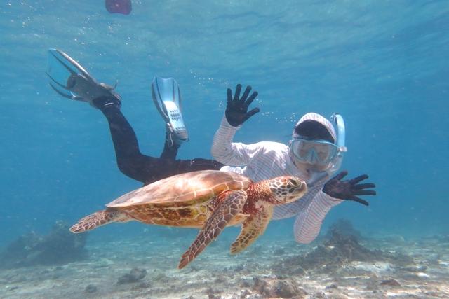 【2.5%還元】【沖縄・宮古島・シュノーケリング】貸切プライべートツアー!ウミガメ探そう!3歳から楽しめるシュノーケルツアー【2名から予約可能】