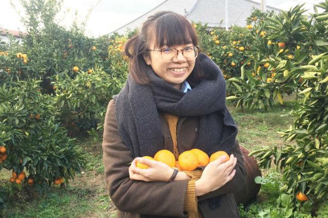 【愛媛・西条・みかん狩り】甘い温州みかんを60分食べ放題!みかん狩り・農業体験