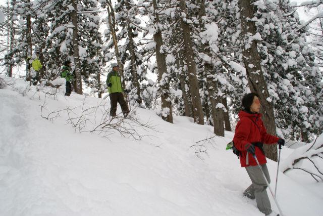 【新潟・津南・スノーシュー】白銀の山々を一望しながらスノーシュートレッキング体験