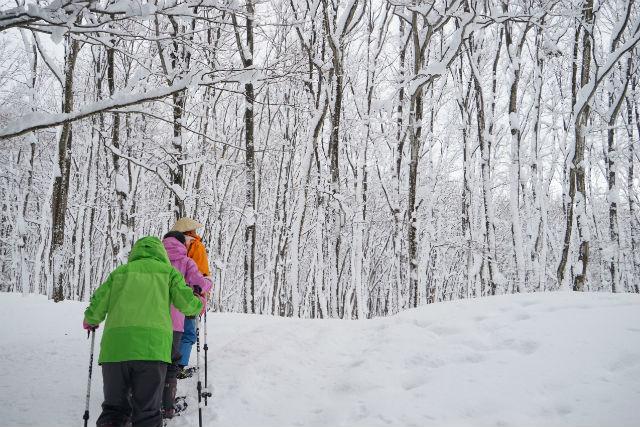 【新潟・十日町・スノーシュー】白銀の世界を散策!越後湯沢駅から雪国豪雪ライナー(往復バス)付でいく美人林スノーシュー体験