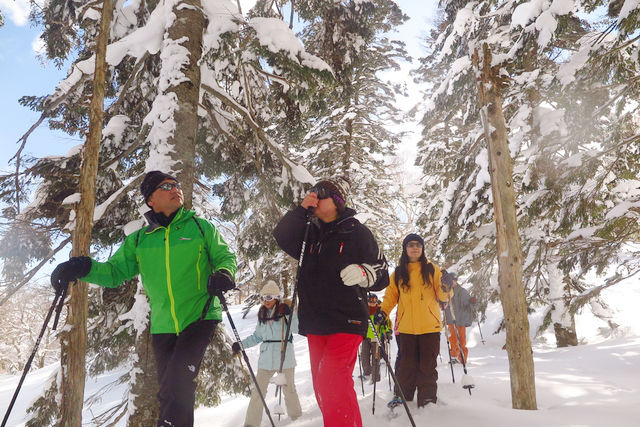 まったりと雪の森を歩くのも最高に気持ちいいです