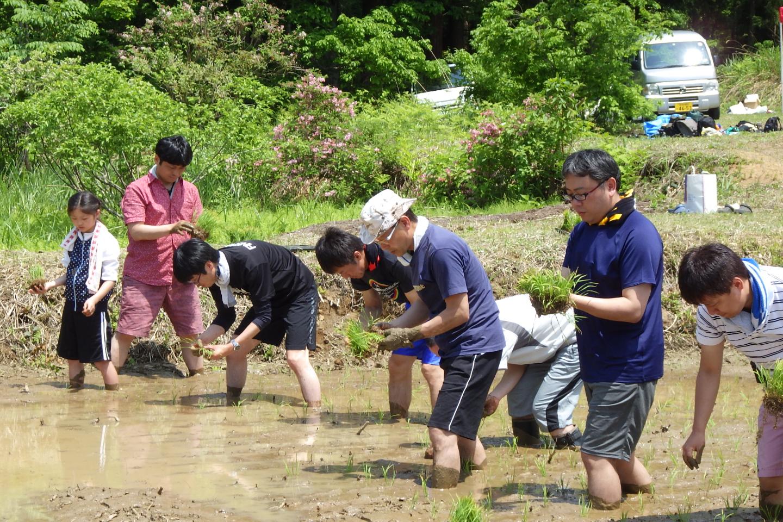 【新潟・十日町・農業体験】田植えから稲刈りまで体験!田っぽビオトープ大作戦