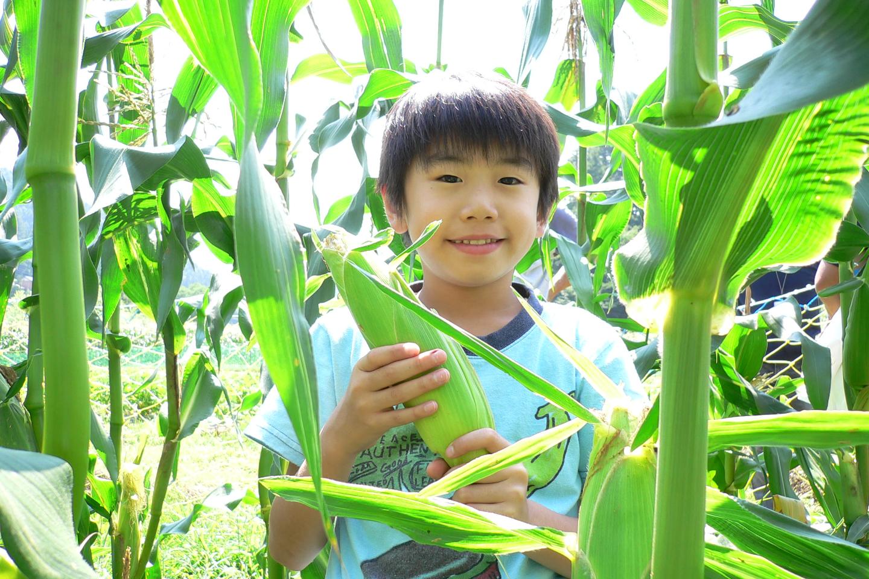 【長野・阿智・農業体験】リピーター続出の農園で体験!浪合名産のとうもろこし狩りを楽しもう