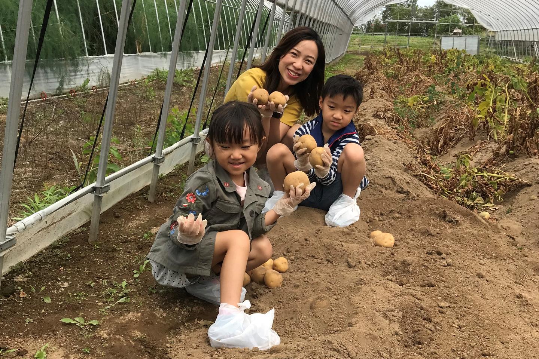 【北海道・中富良野町・農業体験】北海道の自然のめぐみ!じゃがいも掘り(北あかり)