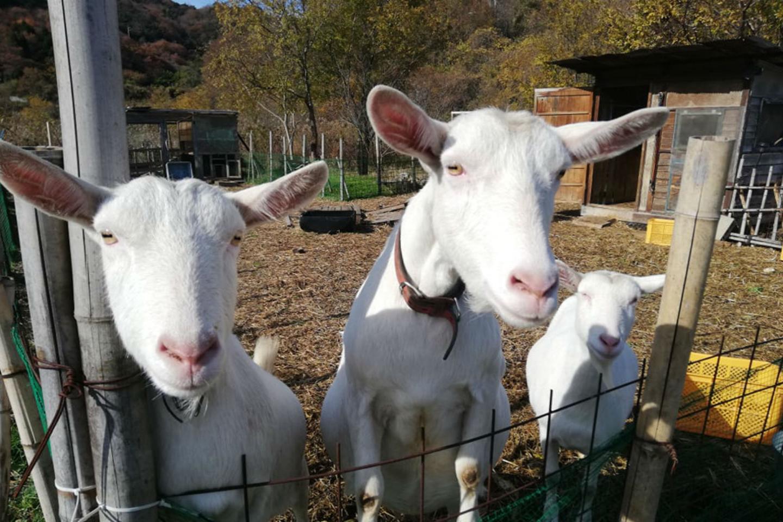 【岡山・牛窓・生きもの観察】海辺の農園で動物と触れ合い~自分で摘んだハーブでお茶をたのしもう!