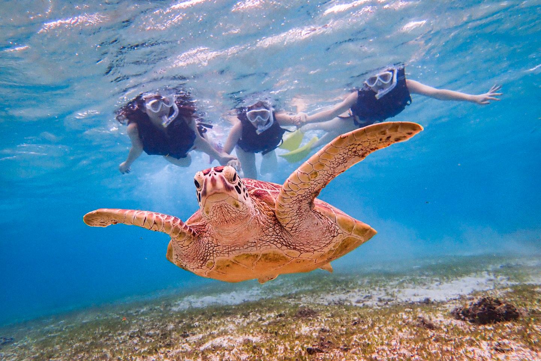 【2.5%還元】【沖縄・宮古島・ロケーションフォト】可愛いウミガメと記念撮影!宮古島撮影ツアー【1名から予約可能】