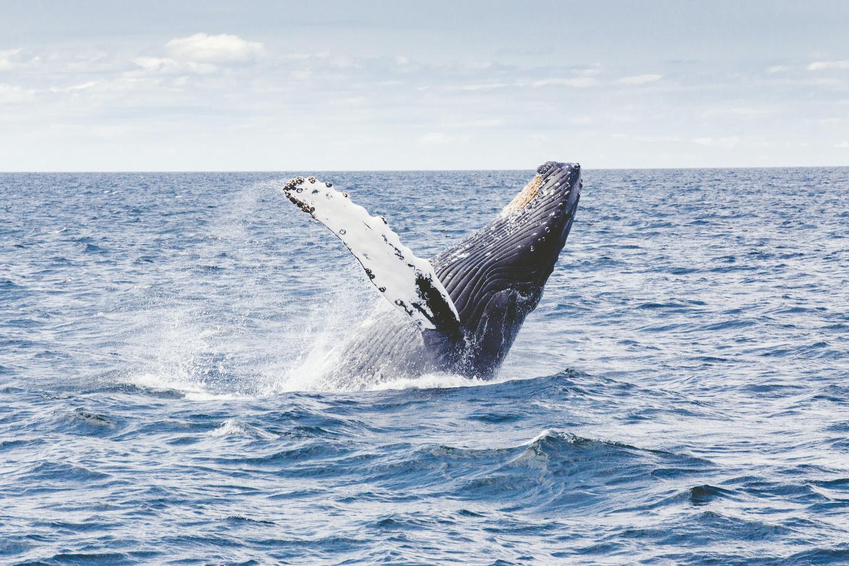 【2.5%還元】【沖縄・宜野湾・ホエールウォッチング】ダブルで楽しむ!クジラウォッチ&パラセール【5名から予約可能】