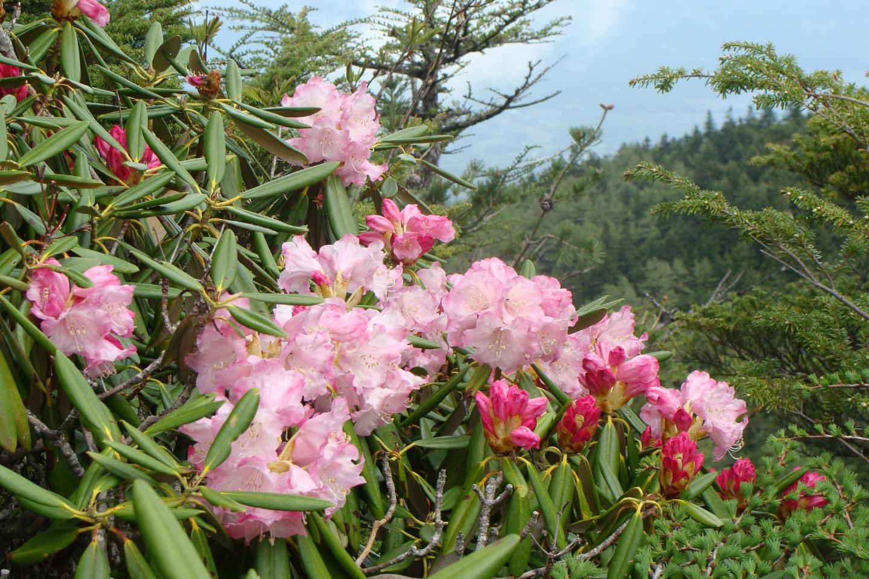 【2.5%還元】【長野・小諸・登山】標高2,000mを彩る圧巻の景色。高峰山フラワーウォッチング【2名から予約可能】