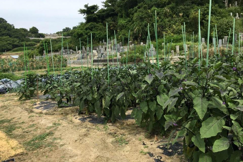 【岡山・牛窓・農業体験】畑で収穫!旬の野菜、牛窓の実りをお裾分け♪