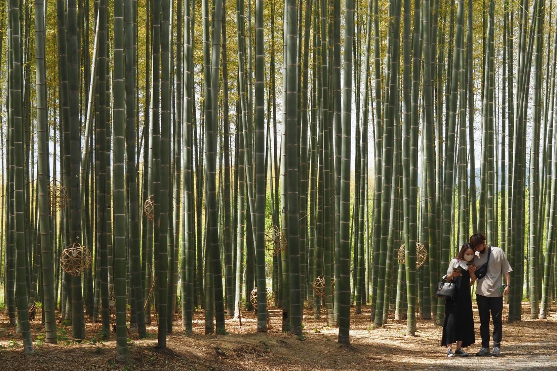 若竹の杜・若山農場