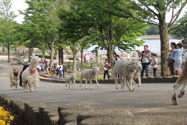 【最大200円割引】那須りんどう湖レイクビュー クーポン(入園)