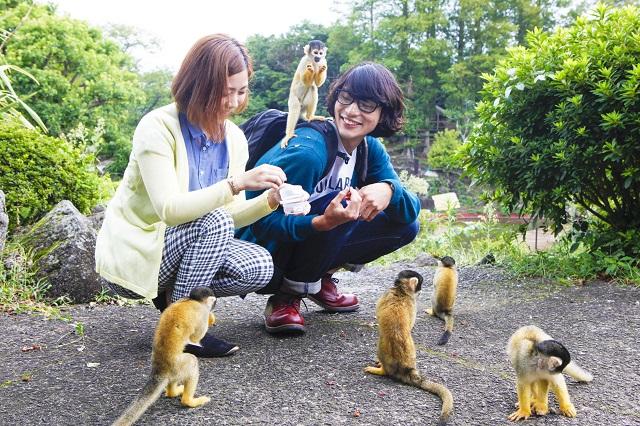 【最大300円割引】伊豆 シャボテン動物公園 入園クーポン