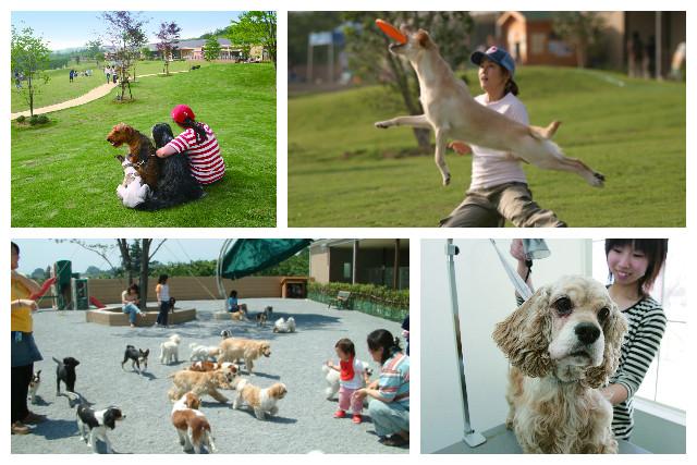 【15%割引】世界の名犬牧場 クーポン(飼い主入場料)