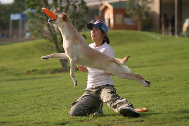【11%割引】世界の名犬牧場 クーポン(犬用入場料)