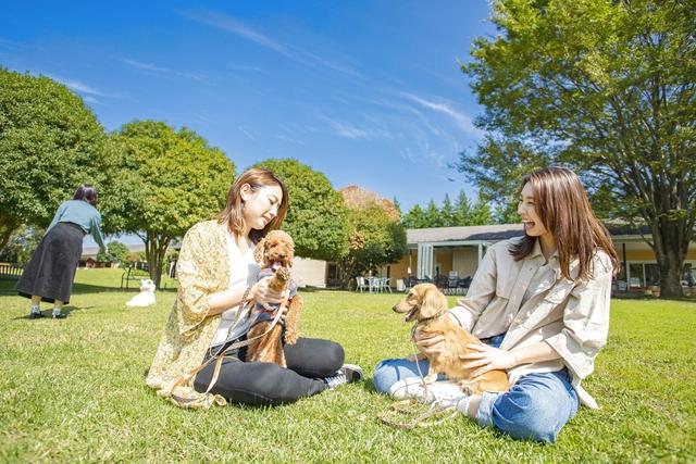 【20%割引】世界の名犬牧場 クーポン(入場料+お散歩わんちゃん&おやつセット)