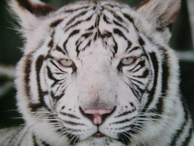 【最大200円割引】しろとり動物園 入園料割引