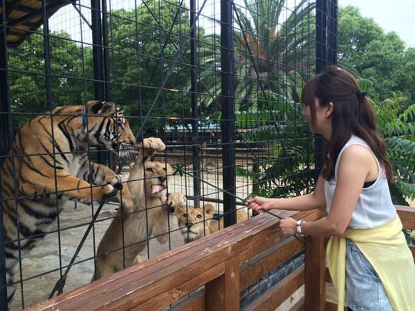 しろとり動物園 ナイトZOO(計4回開催:8月14日、8月21日、8月28日、9月4日)入園券