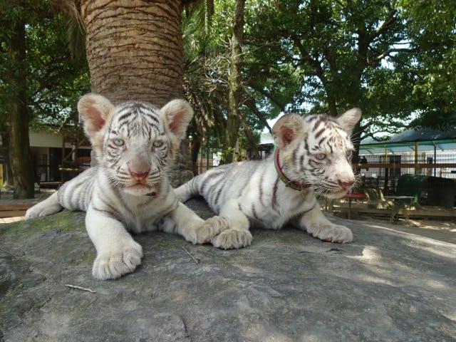 しろとり動物園 当日入園チケット
