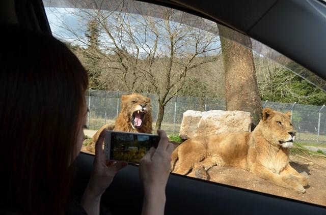 【200円割引】秋吉台自然動物公園 サファリランド クーポン(入園チケット+エサ代)