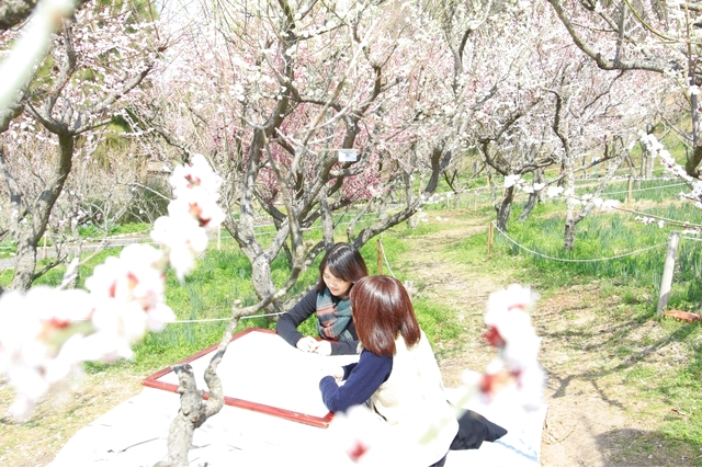 大阪府立花の文化園 入園チケット(前売り券)