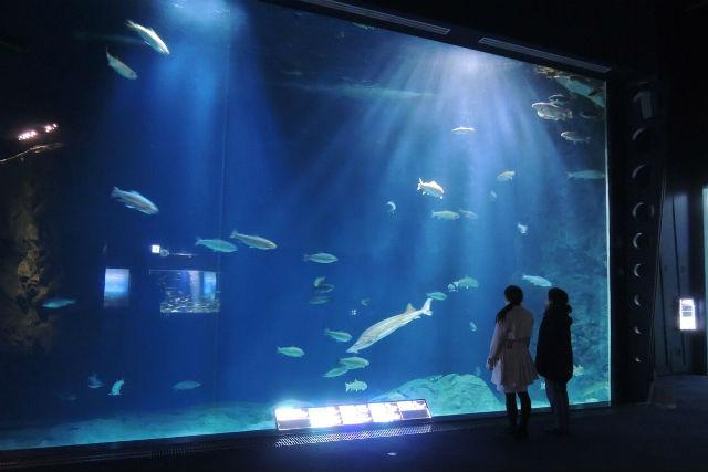 【最大200円割引】サケのふるさと 千歳水族館 クーポン(入館)
