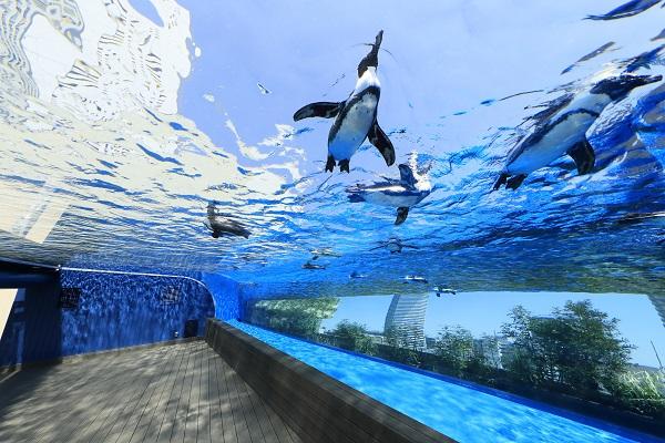 サンシャイン水族館 割引きチケット情報