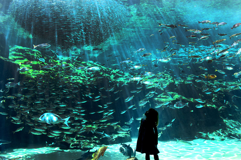 【最大1,000円割引】エンジョイチケット(九十九島水族館+九十九島遊覧船+九十九島動植物園)